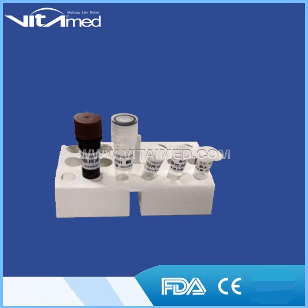 2019-Novel Coronavirus (2019-nCoV) RT-PCR Detection Kit